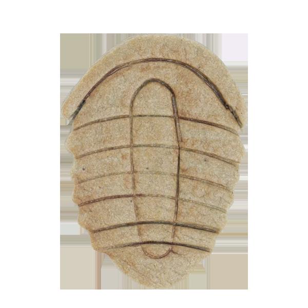 恐竜クッキー・三葉虫